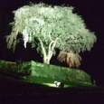 水戸野の枝垂桜