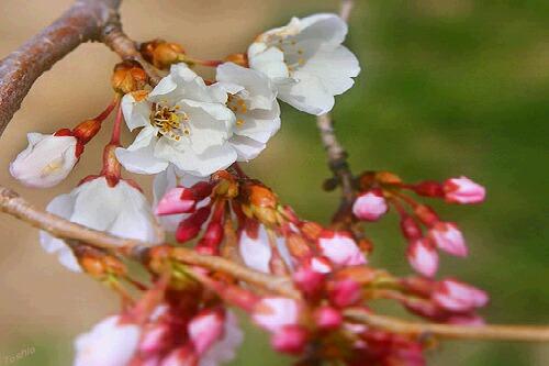 Nikon2010_0321_041