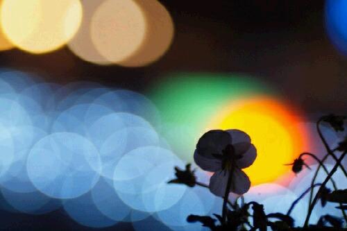 Nikon2010_0424_033